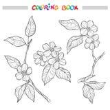Branches de jardin de ressort Illustration noire et blanche décorative fleurie Éléments pour la page de livre de coloriage Photos stock