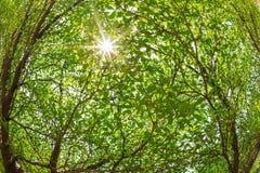Branches de l'arbre contre la lumière du soleil Photo stock