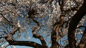 Branches de l'arbre de floraison avec le nid banque de vidéos