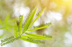 Branches de la feuille en bambou comme concept de carte d'esprit Photographie stock libre de droits