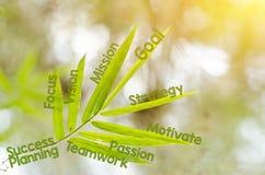 Branches de la feuille en bambou comme concept de carte d'esprit Images libres de droits
