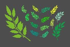 Branches de laurier illustration de vecteur