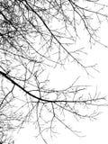 Branches de noir de silhouette photographie stock libre de droits