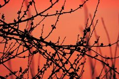 Branches de pêche au coucher du soleil Photographie stock libre de droits