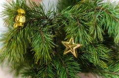 Branches de pin décorées Photos libres de droits