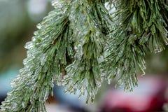 Branches de pin dans la glace Image libre de droits