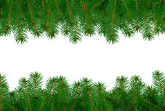 Branches de pin dans le cadre Photos libres de droits