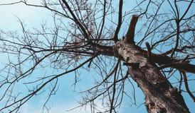 Branches de pin en automne Photographie stock libre de droits