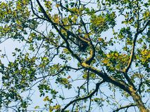 Branches de ressort photographie stock libre de droits