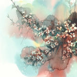 Branches de Sakura à l'arrière-plan d'aquarelle de fleur Image libre de droits