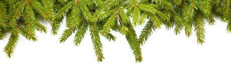 Branches de sapin Photo stock