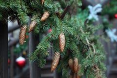 Branches de sapin de fond de Noël avec des cônes Photos stock