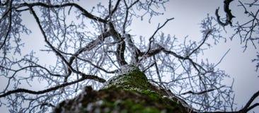 Branches de silhouette Photographie stock libre de droits