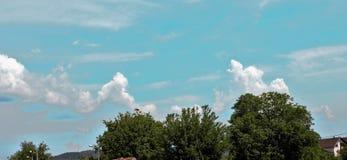 Branches de vert de ciel bleu et nuages blancs Photos libres de droits