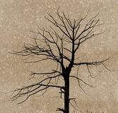 Branches of dead tree Stock Images