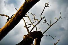 Scary dried branch over cloudy sky stock photo