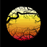 The branches of the dead tree. On the background of the desert at sunset Stock Photo
