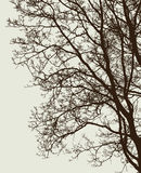 Branches of a deciduous tree without leaves Stock Images