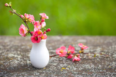 Branches of delicate pink flowers Royalty Free Stock Images