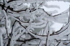branches den icy treen royaltyfria foton