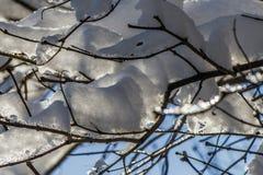 Branches des arbres dans la neige de fonte dans la perspective du ciel et du soleil Image libre de droits