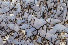Branches des arbres dans la neige de fonte dans la perspective du ciel et du soleil Image stock