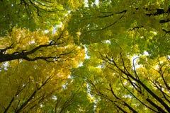 Branches des arbres dans le ciel Photographie stock