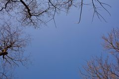 Branches des arbres dans le ciel bleu Image libre de droits