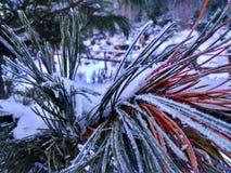 Branches des arbres et des buissons en gelée photos libres de droits