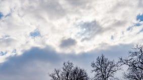 Branches des arbres sans feuilles contre un ciel nuageux bleu photographie stock libre de droits