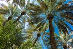 Branches des palmiers dattiers sous le ciel photos stock