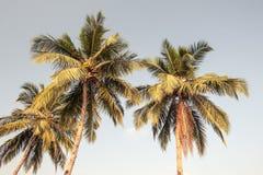 Branches des paumes - rétro style de vintage Photographie stock libre de droits