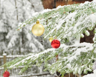 Branches of dressed Christmas tree in tranquil winter forest. Christmas outdoor background. Stock Photo
