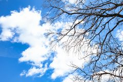 Branches of dried tree under white clouds in sky. Dark branches of dried tree under white clouds in blue sky stock photo