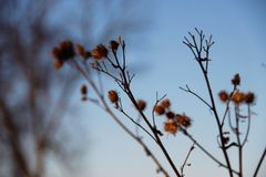 Branches of dry grass against the blue sky stock photo