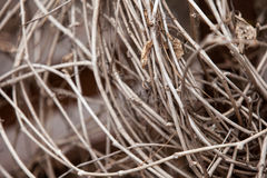 Branches dry last year& x27;s grass with withered leaves Stock Image