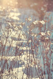 Branches of dry plants with snow. Lit with sunlight Stock Images