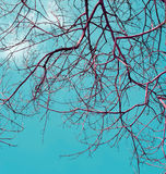 Branches of dry wood with blue sky Stock Photo