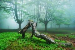 Branches embrassant dans la forêt Photo stock