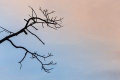 Branches en bois et fond de ciel bleu Photos libres de droits