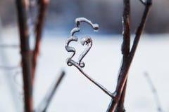 Branches en cristal éclatantes et translucides Photo stock