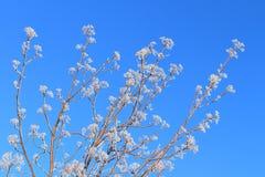 Branches en gelée Photos libres de droits
