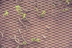 Branches entwined with veneer metal Stock Photos