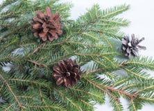 Branches et cônes d'arbre de Noël sur le fond de neige Photo libre de droits