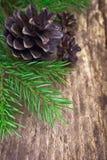 Branches et cônes de sapin Image libre de droits