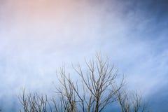 Branches et coucher du soleil d'arbre sur le fond de ciel Photo stock