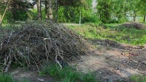 Branches et déchets secs gris dans la forêt un jour ensoleillé clips vidéos