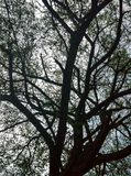 Branches et feuilles photos stock