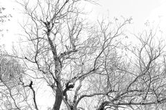 Branches et feuilles Images libres de droits