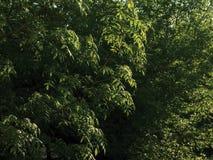 Branches et feuilles Photo libre de droits